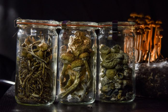 Psilocybin is an active ingredient of magic mushrooms.