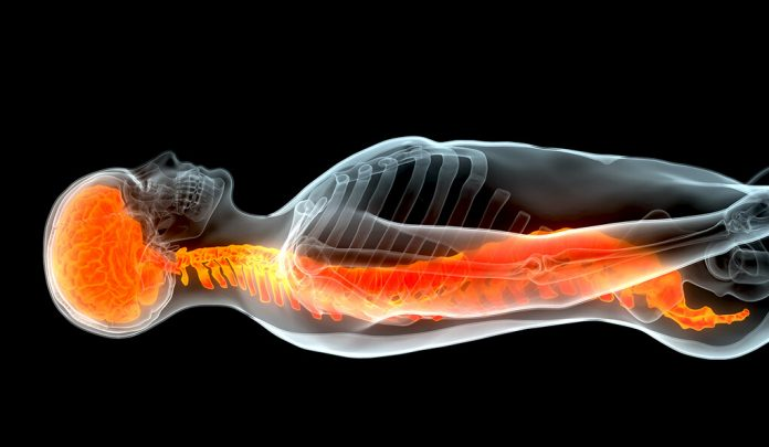 Stem cells infusion treat spinal cord injuries