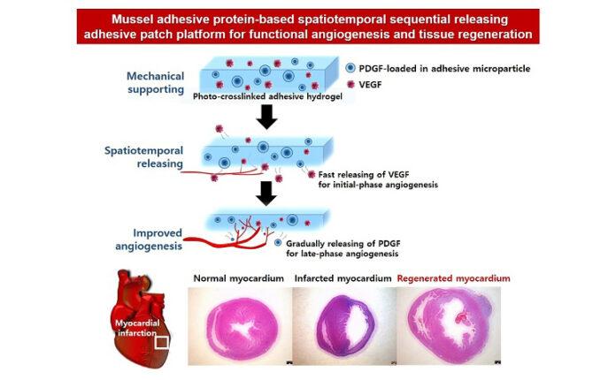 angiogenesis by hydropatch